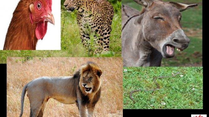 expresiones animales