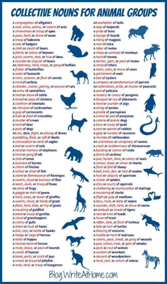 nombres colectivos animales