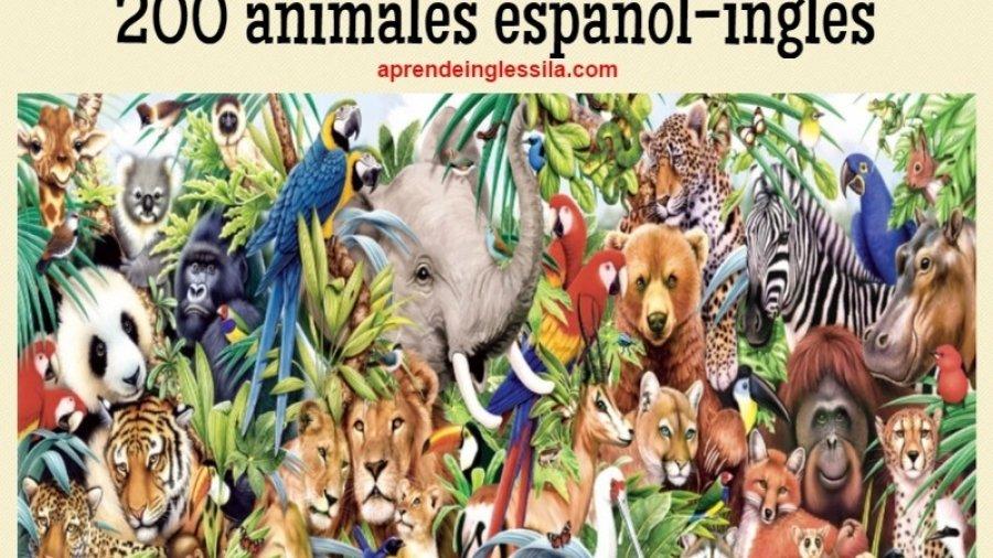 animales inglés